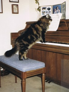 Pearl the Piano Cat (1)